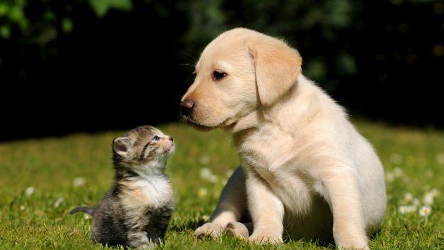 Il Primo Manuale Di Diritto Degli Animali Domestici Adriaeco